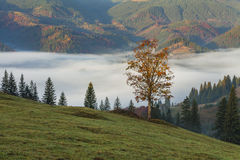 Amazing thick fog in the Carpathian Mountains. Stock Photo