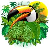Toco Toucan Wild Exotic Bird on Tropical Jungle Vector Illustration. Amazing Toco Toucan Wild Exotic Bird from Brazil surrounded by a Dense Rainforest, a Green stock illustration