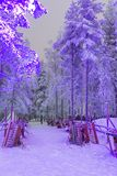 Amazing Tranquil Winter Forest Scenery in Suomi Nordic Area. Travel Concepts and Ideas. Traditional Lapland Winter Sledge Laid Turned Over in Suomi Village in Stock Photo