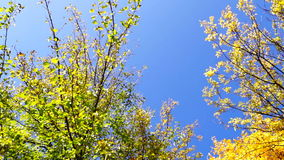Amazing tree crown rotation and blue sky in sunny day in park stock video footage