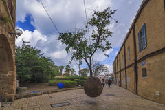 Amazing tree growing in the air. Jaffa, Tel Aviv. Royalty Free Stock Photography
