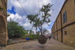 Amazing tree growing in the air. Jaffa, Tel Aviv. Royalty Free Stock Image
