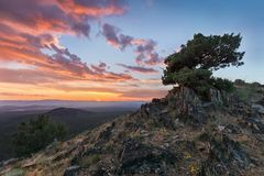 Amazing tree growing out of the rock at sunset. Colorful landscape with old tree with green leaves, mountains and sky with sun in. The evening. Summer travel in stock photos