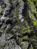 Amazing tree texture closeup Stock Photo