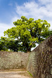 Amazing tree on top of Japanese Zen castle walls. Beautiful tree by sunshiny day standing on castle palace walls of Kumamoto castle in Kyushu, Japan Royalty Free Stock Photography
