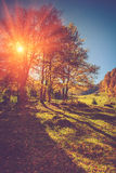 Amazing trees on a hill slope in sunlight at mountain valley. Colorful foliage in the autumn. Stock Photo