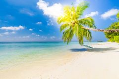 Amazing tropical beach background. Palm tree with swing, summer day, tropical landscape. Vacation and holiday beach concept stock photography