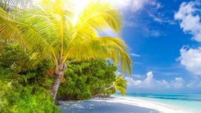 Beautiful tropical landscape. Maldives island beach and palm trees. Perfect tropical banner Stock Photography