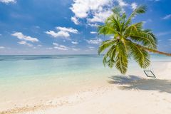 Amazing tropical beach scene. Palm tree with swing, summer day, tropical landscape. Vacation and holiday beach concept royalty free stock photos