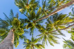 Amazing tropical beach scene and palm trees and blue sky for tropical beach background. Beautiful green palms under blue sky. Relaxing tropics landscape. Calm Stock Photos