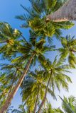 Amazing tropical beach scene and palm trees and blue sky for tropical beach background. Beautiful green palms under blue sky. Relaxing tropics landscape. Calm Stock Image