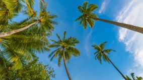 Amazing tropical beach scene and palm trees and blue sky for tropical beach background. Beautiful green palms under blue sky. Relaxing tropics landscape. Calm Royalty Free Stock Photos