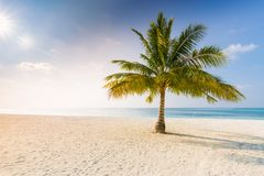 Amazing tropical beach scene and palm trees and blue sky for tropical beach background. Beautiful green palms under blue sky. Relaxing tropics landscape. Calm Stock Photography