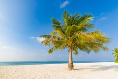 Amazing tropical beach scene and palm trees and blue sky for tropical beach background Royalty Free Stock Photos