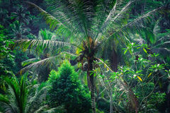 Amazing tropical nature Stock Image