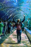 People stand in awe in a tunnel of plexiglass showing Sea creatures at the georgia aquarium USA with scuba divers in tank Stock Photography