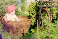 A cute little girl sits on a hay in a basket in the garden stock photos