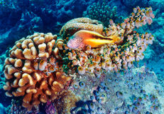 Amazing undersea nature Royalty Free Stock Photos