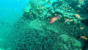 Amazing underwater life of marine life in sea of Maldives. Swimming in world of colorful beautiful seascape. Aquarium of wild nature. Abyssal relax diving stock video