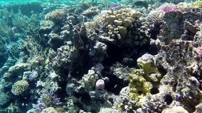 Amazing underwater world with corals and fishes stock footage