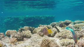 Amazing underwater world - exotic fish and corals stock video footage