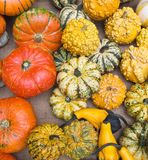 Amazing variety of ornamental gourds! Stock Images