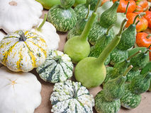 Amazing variety! Ornamental gourds Royalty Free Stock Images
