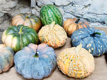 Amazing variety! Ornamental gourds. Royalty Free Stock Image