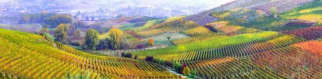 Amazing vast plantation of grape in Piemonte- famous vine region. Landscape of Piemonte,multicolored vineyards,Italy stock photography
