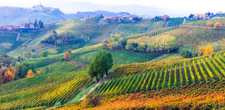 Amazing vast plantation of vineyards in Piemonte- famous vine re Stock Image