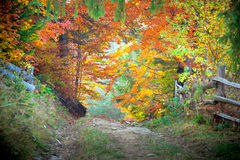 Amazing vibrant Autumn Fall colors in forest landscape and footp Royalty Free Stock Image