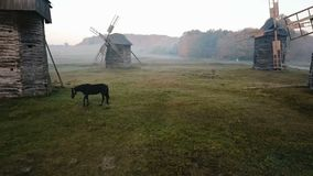 Amazing video footage with horse on field between mills. Countryside foggy morning. horse grazes in a clearing with a. Mill. Beautiful rural mood scene stock video footage