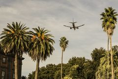 Plane taking off or landing, with exotic palms. stock photo