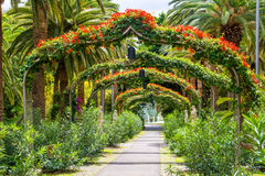 Amazing view of  arch way in Garcia Sanabria park. Location: Cac. Ti garden in Santa Cruz de Tenerife, Tenerife, Canary Islands. Artistic picture. Beauty world Royalty Free Stock Images