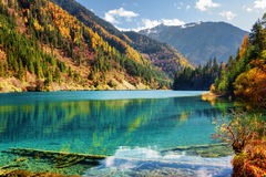 Amazing view of the Arrow Bamboo Lake among autumn woods Royalty Free Stock Images