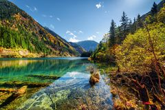 Scenic view of the Arrow Bamboo Lake among colorful fall woods stock image