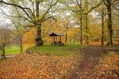 Amazing view of autumn landscape. Yellow orange fallen leaves as sign of fall. Park / forest / outdoor. Beautiful nature landscape backgrounds stock photography