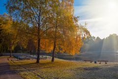 Amazing view of autumn park with beautiful yellow birch trees in the rays of the sun. Park benches on the shore of the pond stock photography