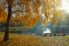 Amazing view of autumn park with beautiful yellow birch trees in the rays of the sun. Park benches on the shore of the pond stock image