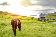 Amazing view of black horse in rural farm grazing green grass wi royalty free stock image