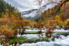 Amazing view of the Bonsai Shoals, Jiuzhai Valley National Park Royalty Free Stock Images