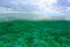 Amazing view on both above water sutface and under water surface world. Amazing nature backgrounds. Maldives, Indian Ocean royalty free stock images
