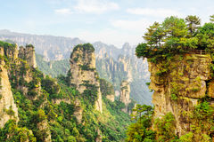 Amazing view of the Pecking rock and canyon Avatar Rocks. Amazing view of the Pecking rock and scenic canyon in the Tianzi Mountains Avatar Mountains, the royalty free stock image