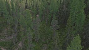 Amazing view from drone of mountain forests and fields in Dolomites Alps stock video