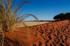 Sand dunes in the pan of Sossusvlei in Namibia. Africa stock photo