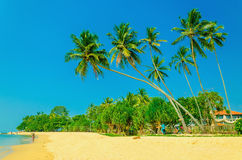 Amazing view of exotic sandy beach with palm trees Royalty Free Stock Photography