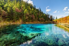 Amazing view of the Five Coloured Pool the Colorful Pond. With azure crystal clear water among fall woods and evergreen forest in Jiuzhaigou nature reserve stock photo