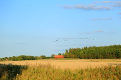 Amazing view of the flock of birds on the blue sky royalty free stock images