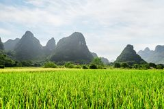 Amazing view of green rice field and scenic karst mountains royalty free stock photos