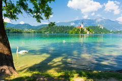 Amazing view on lake Bled in Alps and swan, Slovenia Royalty Free Stock Photo